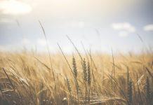 Landwirtschaft / PIxabay