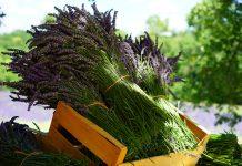 Lavendel Büschel